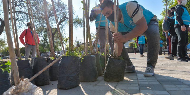 Los Naranjos: Colocan 200 Nuevos árboles En Las Principales Calles Y Avenidas Del Barrio