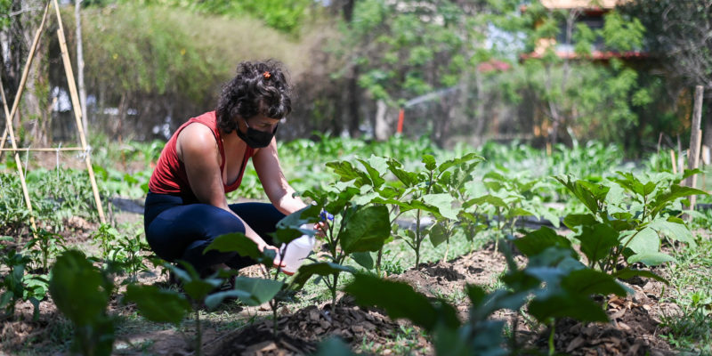 """""""Fomentando Huertas"""": Becarios Presentaron Avances De Sus Trabajos"""