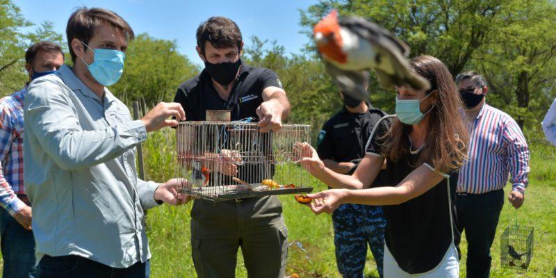 Liberan Más De 40 Aves Provenientes Del Tráfico Ilegal Y Mascotismo