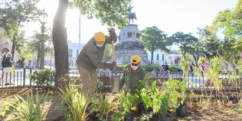 Colocan 5.000 Plantas Y Plantines En Plaza San Martín