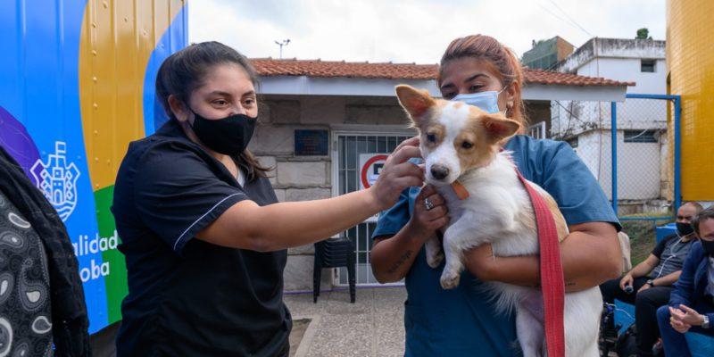 Plan De Castración De Mascotas: Ya Se Sumaron 50 Veterinarias