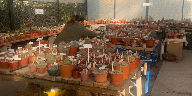 Una Colección De Plantas Suculentas Es El Nuevo Atractivo Recuperado Del Jardín Botánico De La Ciudad