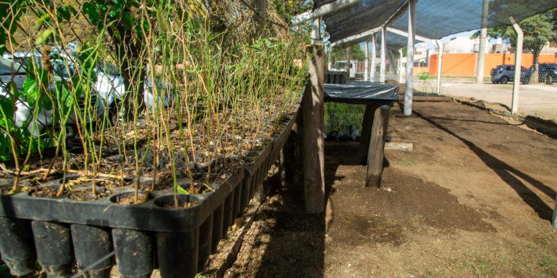 Se Inauguró El Primer Vivero Agroforestal En El Parque Educativo Sur